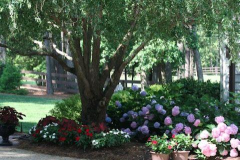 Pretty hydrangeas under a shady tree.  Yes please :) Custom Landscape Design:  Gardenscapes Inc. (Cary/Apex NC)