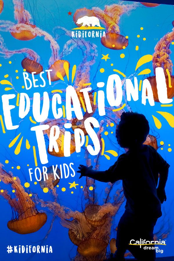 In California, it's easy to sneak a bit of learning into all of the fun. From captivating museums to sleepovers at the zoo, tech and cooking classes or week long filming camps, the list of educational adventures is endless. Click for more on the best learning vacations for kids.
