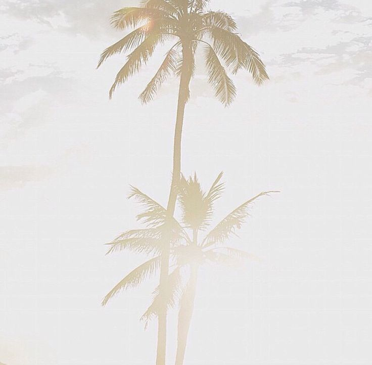 467 best images about Palm Trees on Pinterest
