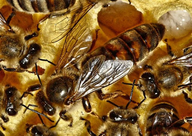 Panoptikum interessanter Dinge und Begebenheiten: Über Epigenetik und eine große Bienen- und eine kl...