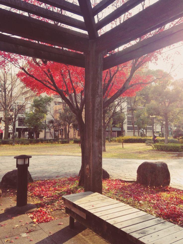 Winter in Japan ( Osaka, 23rd December) red leaves