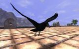 Raven Illusion Costume