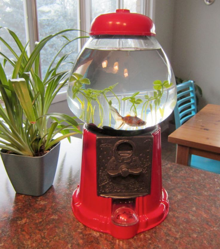 I am pinning this to read later, but I really want to make a betta bowl out of an old candy machine! Top 10 DIY Pet Projects.