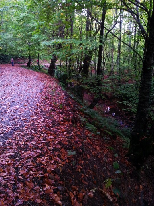Fall.Zonguldak/Turkey