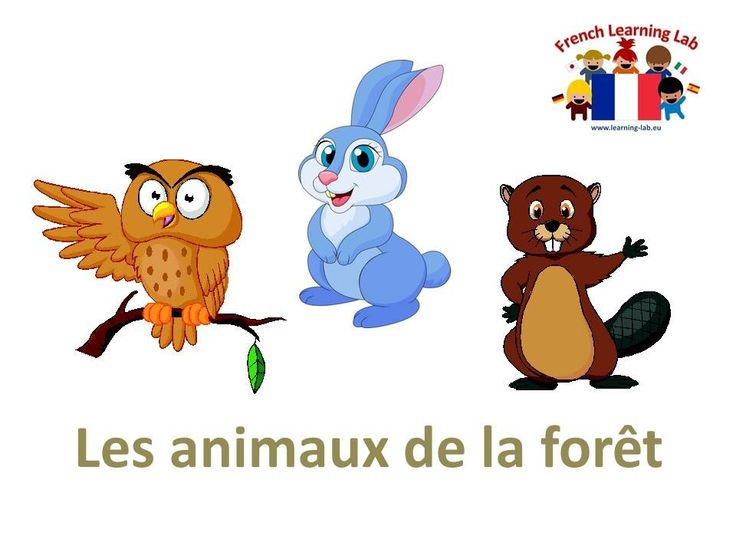Les animaux du foret - forest animals vocabulary in French