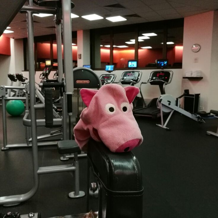 #piggy make #bodybuilding