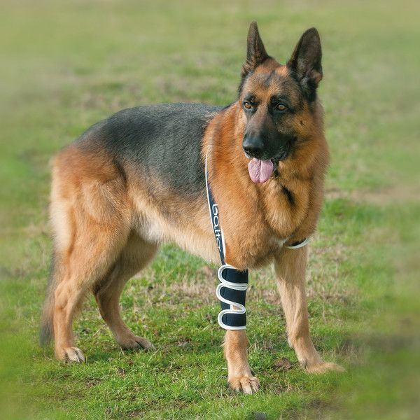 Balto Dog Elbow Brace Bt Soft Protects Your Dog In Cases Of