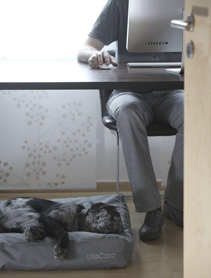 Hundepude til inden- & udendørs (Grå) - Luvio - Petlux