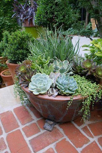 Fed onto Arid gardensAlbum in Gardening Category