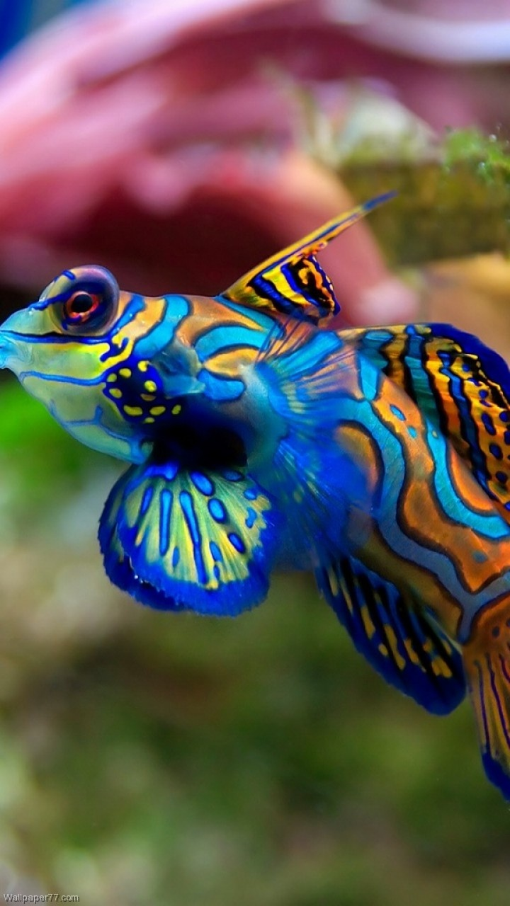 8 best animals images on pinterest animals nature and ocean life