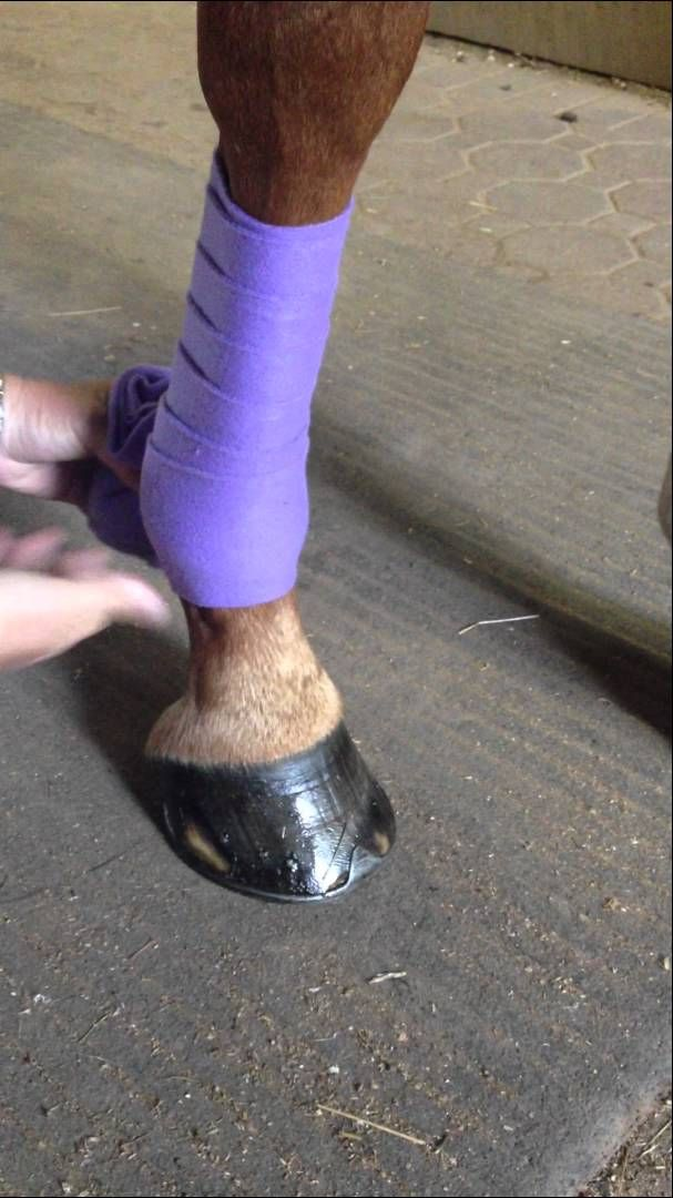 How to Wrap Polos 101. Had a pretty good idea how to do this before, but I like watching this video just for the sole fact that they wrap this horse's leg so nicely!