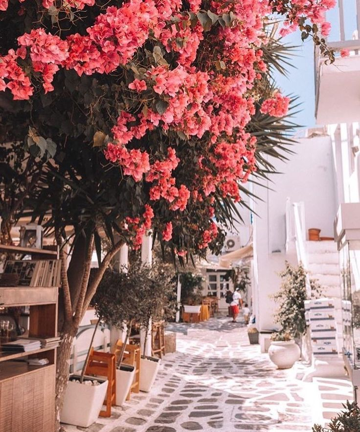 All pink everything || Mesmerised by the streets of Mykonos  @lisadanielle__  #mykonos #exploremore #beachgold