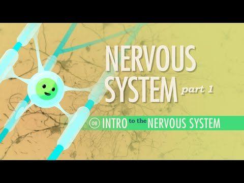 The Nervous System, Part 1: Crash Course A&P #8 - YouTube