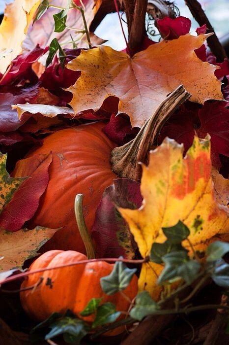 Pumpkin and fall foliage.