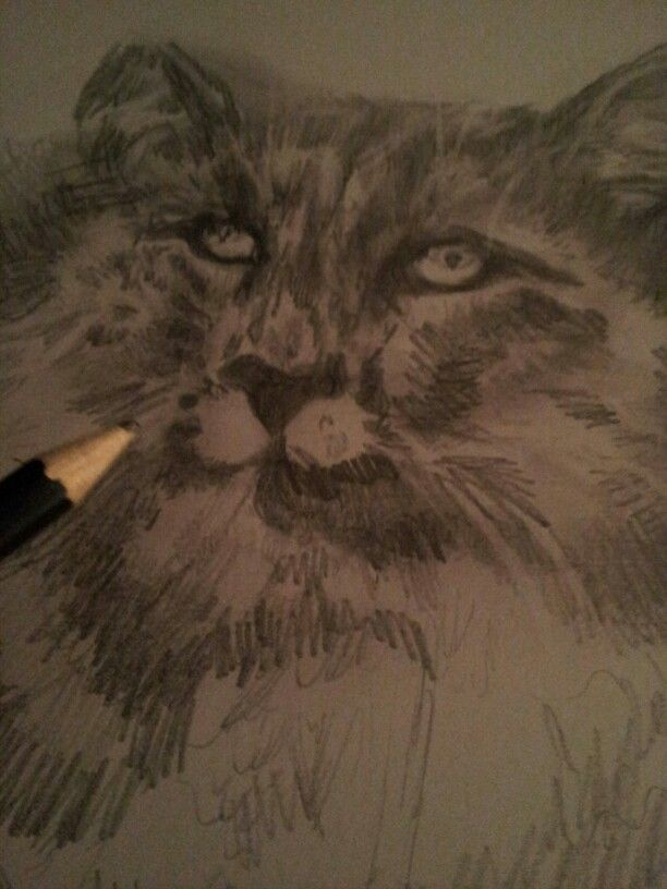 This is my cat Handsome ! He  was a rescue .We adore him .loved sketching this .