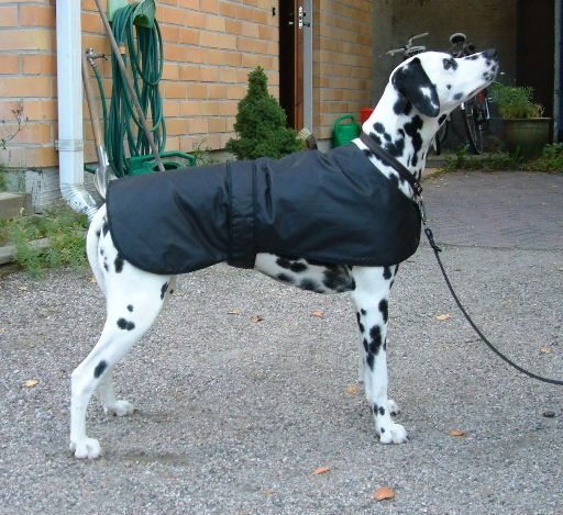 12 best Dog Coats images by Jennifer Harrington on Pinterest | Dog ...