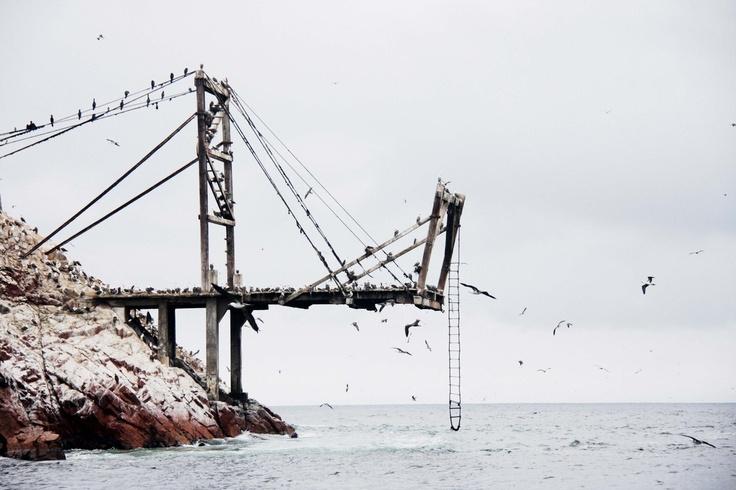 zee + vogels + loopbrug + ladder = goed