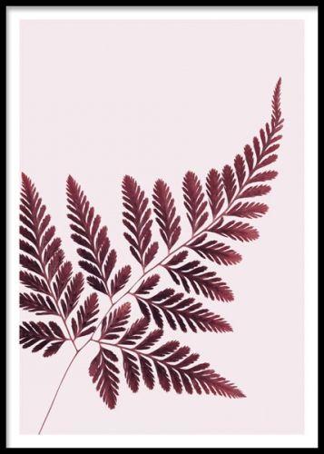 Red Fern, poster. En snygg och stilren poster med en ormbunke. Ett stilsäkert botaniskt motiv som är perfekt att kombinera ihop med andra posters i ett kollage. Blanda gärna svartvitt och färg för ett intressant och balanserat intryck - supersnyggt.