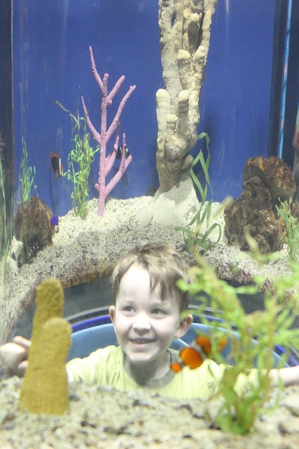 The Nemo Tank at the Chattanooga Aquarium in Chattanooga TN.  Kids and adults alike love to pop up inside the bubble's in the nemo tank. it's like being inside the tank.  Look at the joy on this youngster's face!Bubble