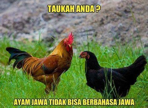 Ayam jawa tidak bisa berbahasa Jawa - #Meme…