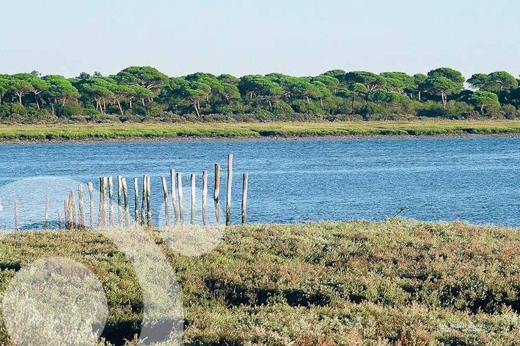 San Pedro river. All the information to plan your trip to #Bahia_de_Cadiz in www.qnatur.com