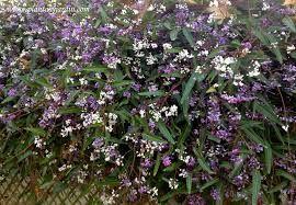 Resultado de imagen para lila planta