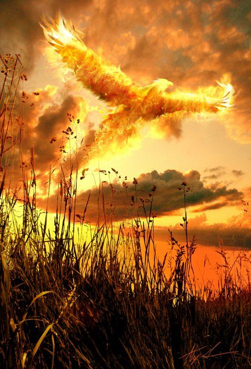 Firebird by Ahyicodae.deviantart.com on @deviantART