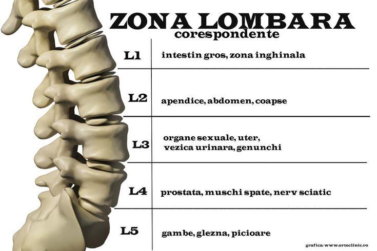 zona lombar[