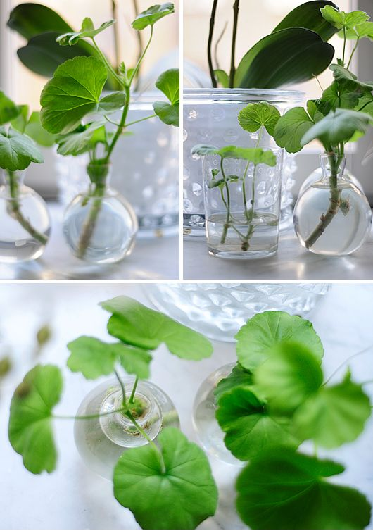 Very simple greenery in clear glass. Good for against simple white setting for a contemporary pop of colour