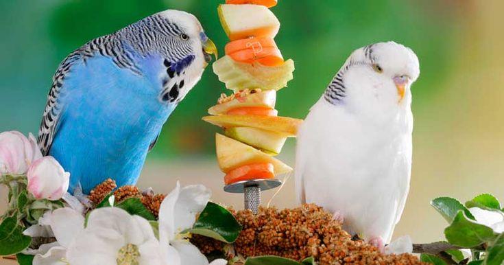 Im Zoofachhandel gibt es geeignete Futterhalter für Frischkost. Bild: WZF/Schanz