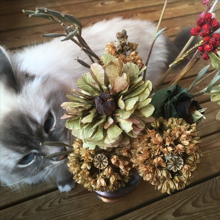 Kuivakukkia, dry flowers DIY