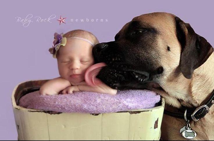 babies with english mastiffs | mastiffs and babies. This has Bailey all over it! | Mastiffs