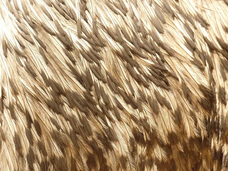 Emu tail feathers