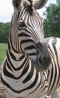 17 Best images about zoo and jungle animals theme and ...