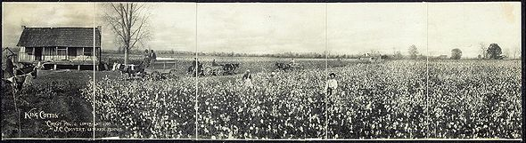 There was a boom in cotton production in the 1830s and by the 1860s, Southern plantations supplied 75% of the world's cotton.  King Cotton became a slogan used by the Confederacy to show that there was no need to fear a war by the United States.  In the end, it misled the Confederates into a hopeless war they lost.
