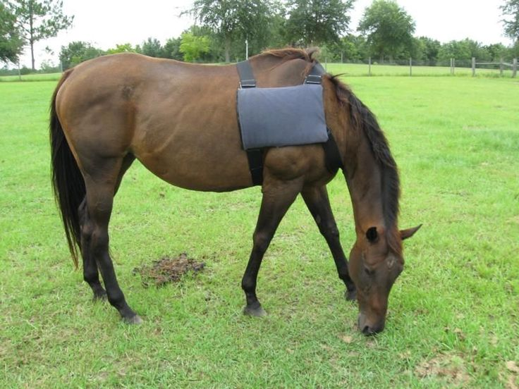 How To Make a Horse Ice-Pack Vest