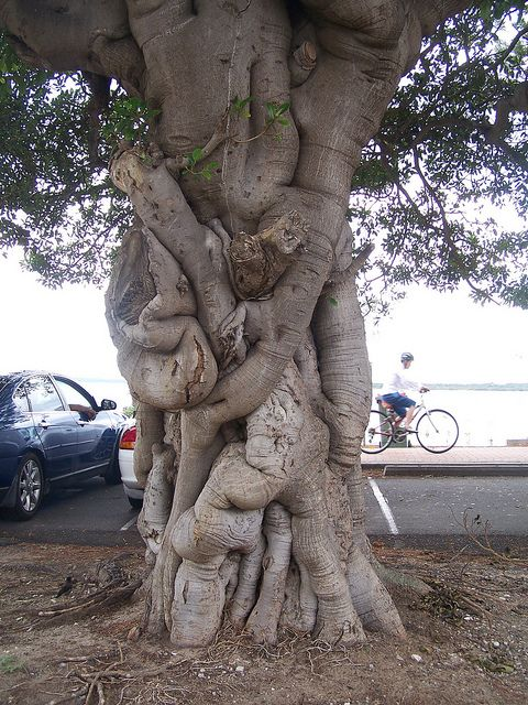 The Spirit Tree by Pandora's Perspective( off with a broken ankle), via Flickr