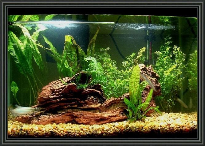 Freshwater Aquarium Design Ideas find this pin and more on aquarium design 20 Gallon Aquarium Decoration Ideas