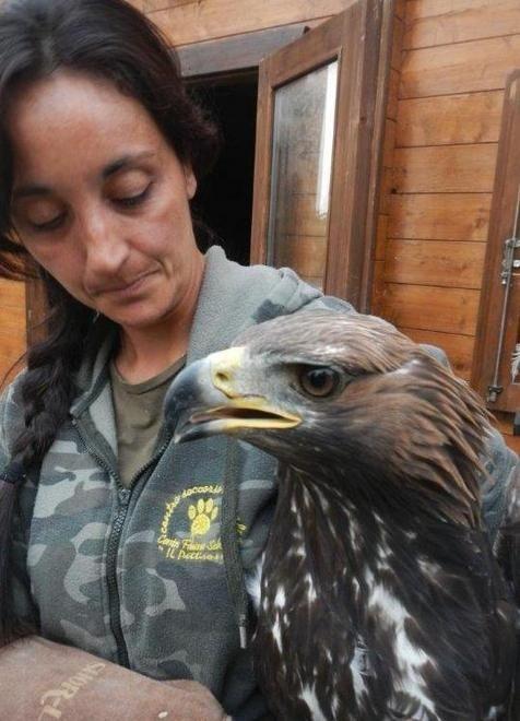 Il Pettirosso: in un anno salvati 3500 animali - Cronaca - Gazzetta di Modena