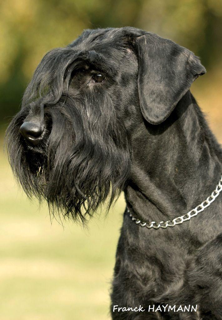 Dog Grooming Carpinteria
