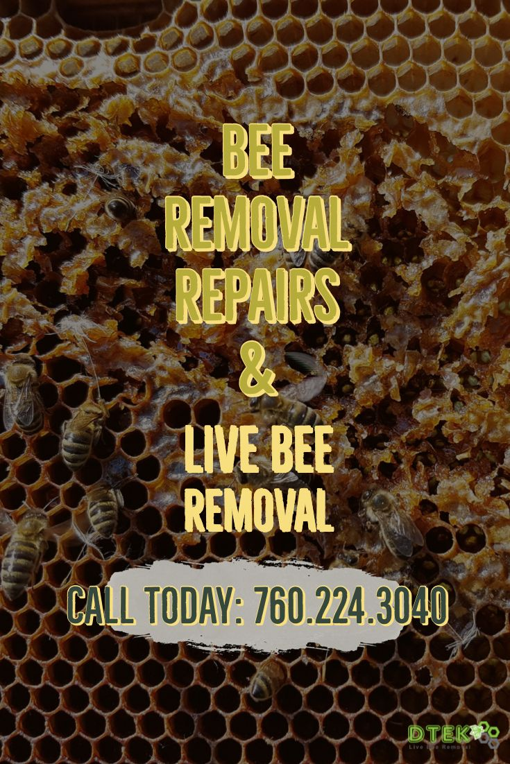 We Handle Any Repair Work That May Be Needed To Your Home After The Live Bee Removal Has Been Performed The Most Commo Bee Removal Siding Repair How To Remove