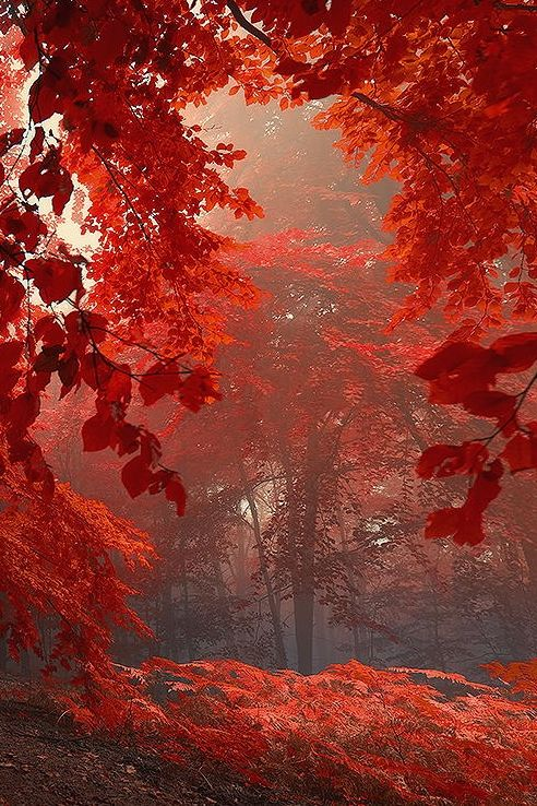 surreal blazing red autumn forest
