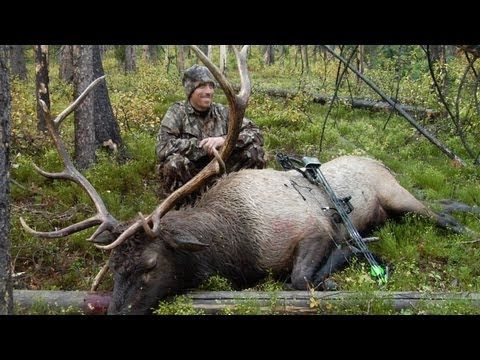 A Magical Morning in the Elk Woods - Bowhunting for Elk Hunting Video - YouTube
