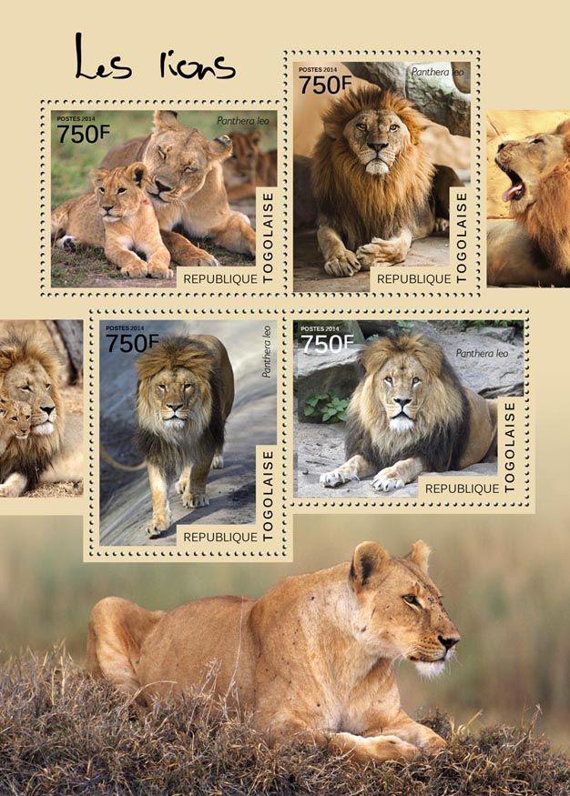 TG 14515 aLions (Panthera leo)