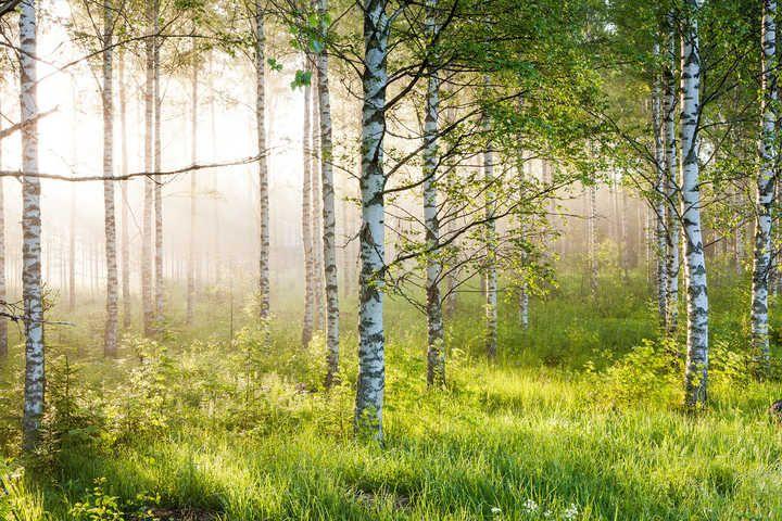 , Birkenwald 5, #Lumas