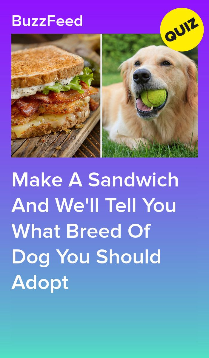 Make A Sandwich And We Ll Tell You What Breed Of Dog You Should