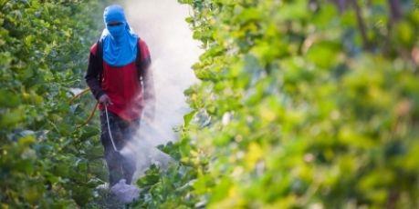 Avaaz - Τέλος στο μοντέλο της Monsanto