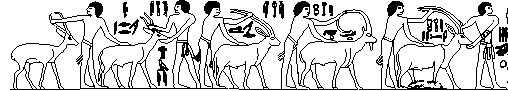 In the following line drawing after depictions in the tomb of Ptahhotep at Saqqara five antelopes are being presented, from right to left: an oryx, an ibex, an addax (also called a Mendes-antelope, nwD.w), and a bubale. The last one may be a Soemmering's gazelle (gsA).