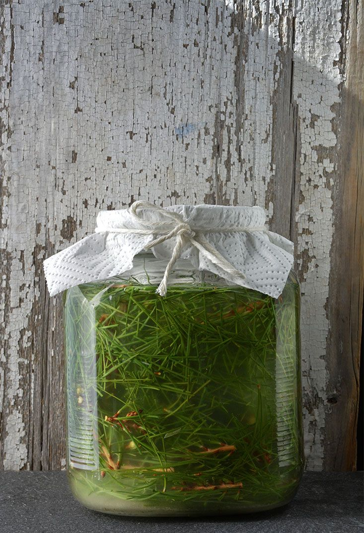 Gardenista Giveaway: The New Wildcrafted Cuisine by Pascal Bauder: Gardenista