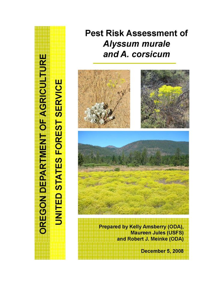 Pest risk assessment of Alyssum murale and A. corsicum, by